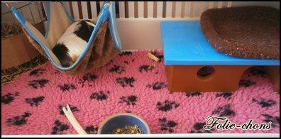 dry bed question cochon d inde wamiz