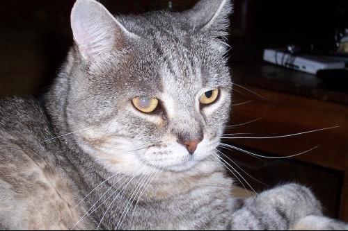 voile blanc mon chat forum chats