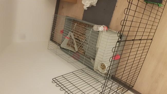amenagement de l enclos lapin nain