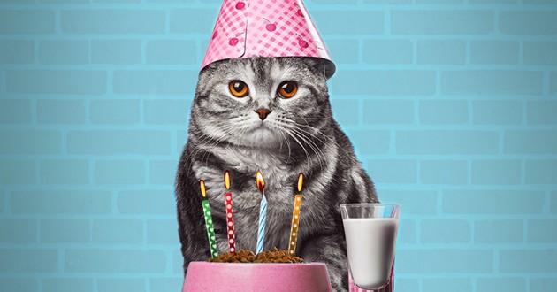 chats qui vivent plus de 20 ans