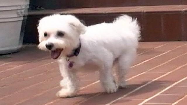 maltraitance chien