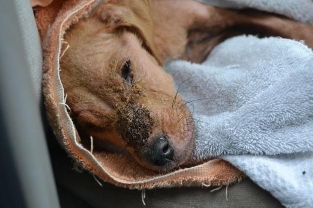 chien abandonné maltraité