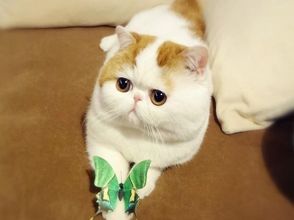 snoopy babe, chat star du web