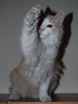 Un chat qui crie victoire   Les plus jolies photos de vos animaux en mouvement  photos