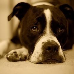 mon chien a des crises d pilepsie que faire en cas de crise d pilepsie nuage ciel d 39 azur. Black Bedroom Furniture Sets. Home Design Ideas