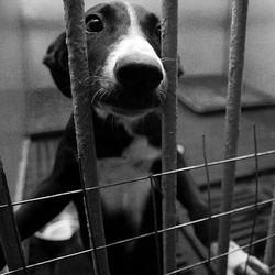 chien abandonné qui se retrouve en refuge ou en spa