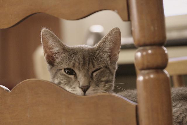 Quizz  Votre chat estil un vrai chat   Chats  Wamiz
