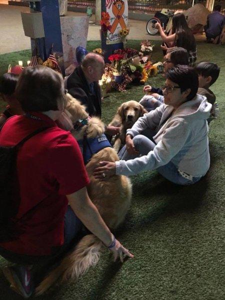 las vegas chiens de thérapie