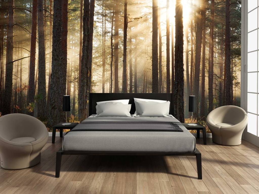 Photo wallpaper Forest sunrise  Walldesign56 Wall Decals