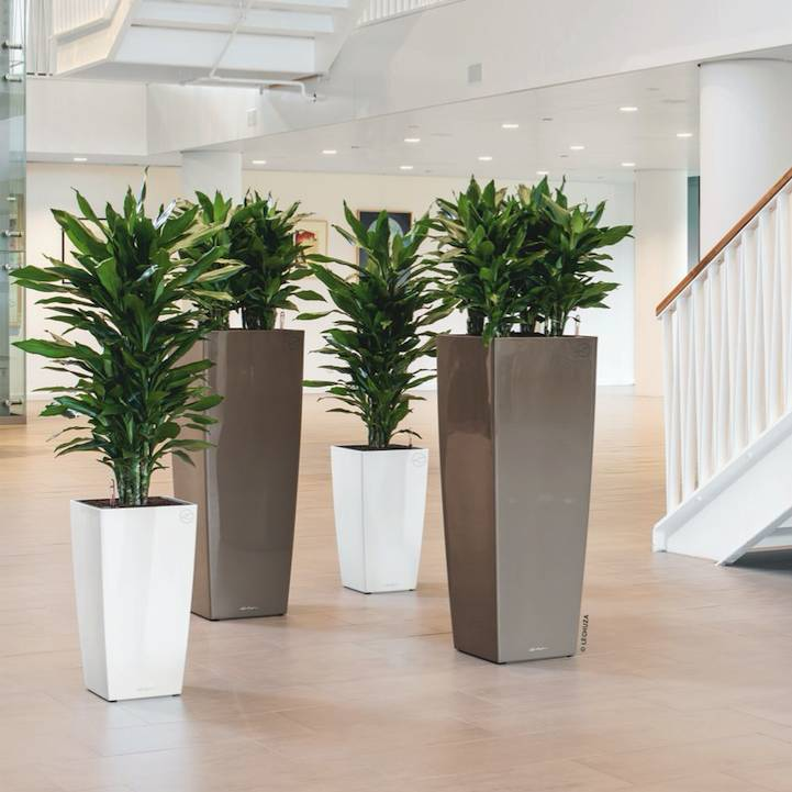 Cadeautip  Grote plant in pot  Fleurdirect