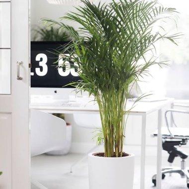 Kamerplanten kopen  Compleet assortiment  Fleurdirect