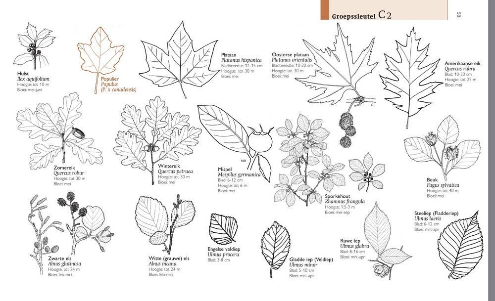 Field guide Dutch flora