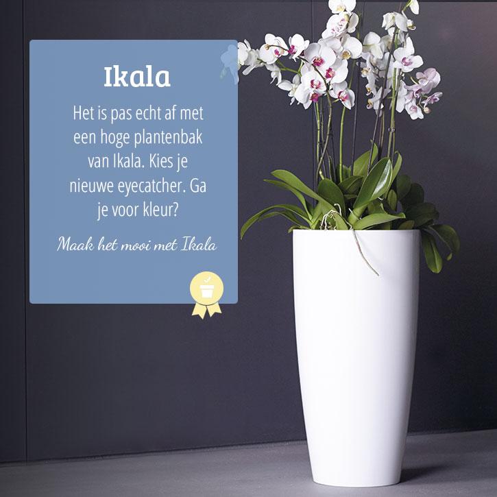 Hoge plantenbakken voor binnen of buiten Mooi voordelig