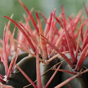 Grote cactussen zijn stoere kamerplanten  123kamerplanten