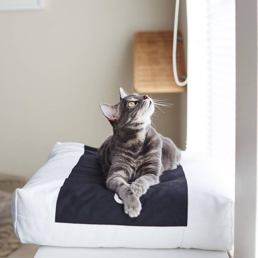Slaapplek Kitten