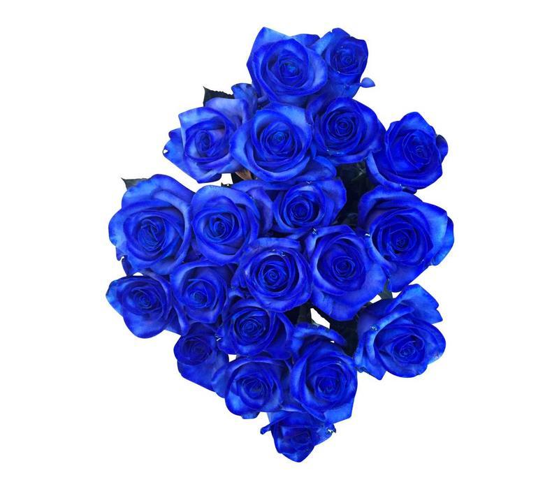 Blaue Rosen bestellen  Rosen online bestellen