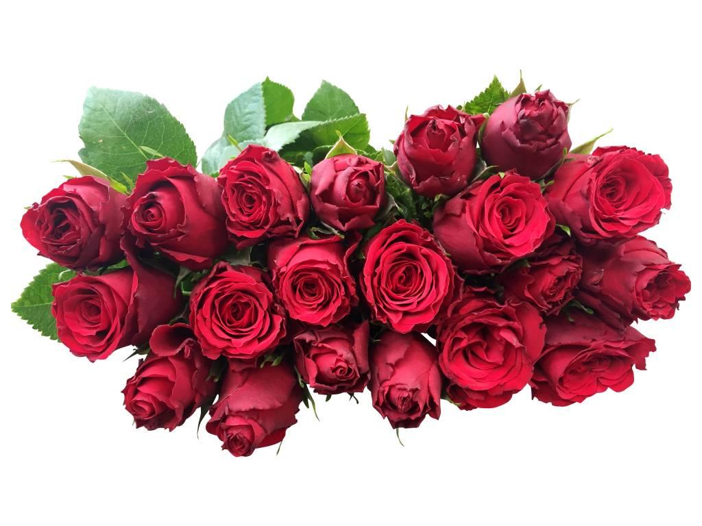 Rote Rosen online bestellen bei bezahlbareBlumende