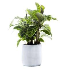 Eenvoudig en snel online kamerplanten bestellen  Fleurnl