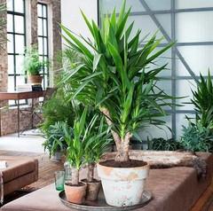 Eenvoudig en snel online grote kamerplanten bestellen