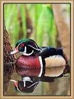 Balloosh Journey Book : balloosh, journey, Journey, (Balloosh), Animal, Classic, Fandom
