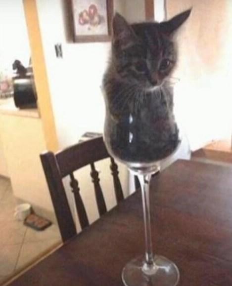 Blessed Cat Images : blessed, images, Blessed, Images., Fandom