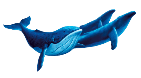 Humpback Whale Transparent Background
