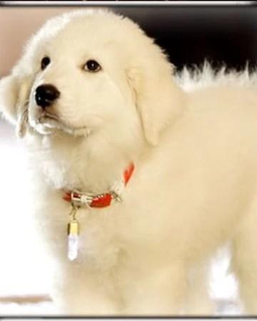 Puppy Paws Movie : puppy, movie, Puppy, Disney, Fandom