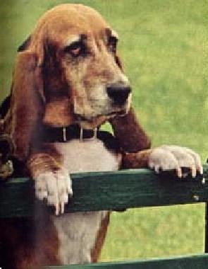 Rosco P Coltrane Dog Name : rosco, coltrane, Flash, Dukes, Hazzard, Fandom