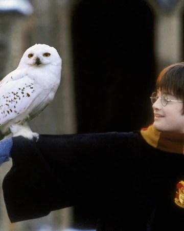Hogwarts Mystery Owls : hogwarts, mystery, Harry, Potter, Fandom