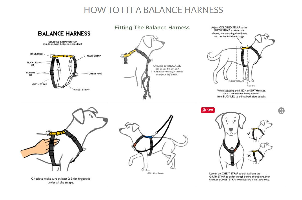 Blue 9 Balance Harness