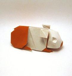 guinea pig [ 1024 x 768 Pixel ]