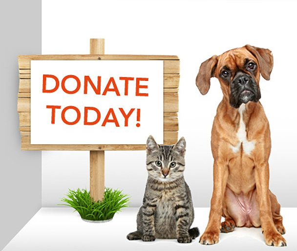 Image result for clipart puppy donate