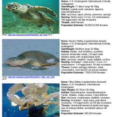 Diagram Turtle S Head 8n Wiring How Can Drones Help Endangered Marine Turtles Kashmir World Please See Http Www Conserveturtles Org Seaturtleinformation Php Page Species Id For More Detailed Diagrams Of Carapaces And Markings