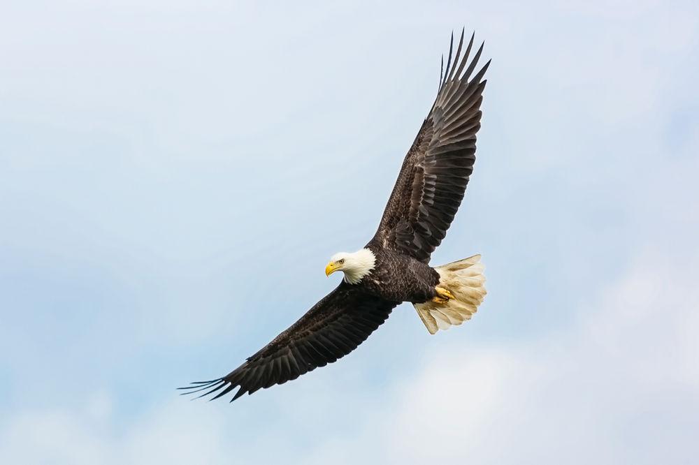 l aigle symbolisme