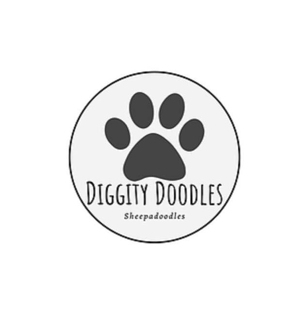 Diggity Doodles Sheepadoodles