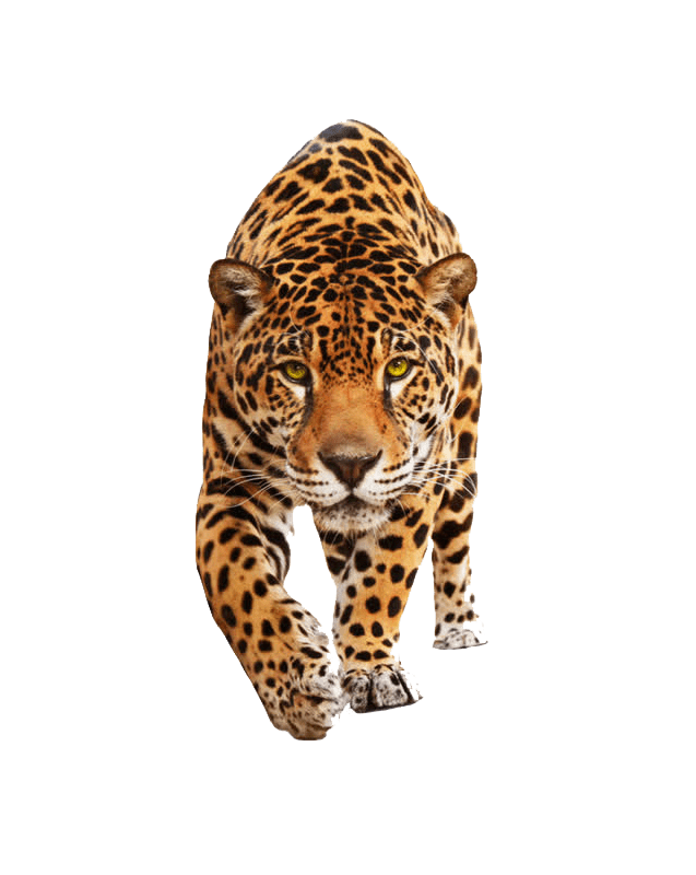 Cute Animals Png : animals, Animal, Images