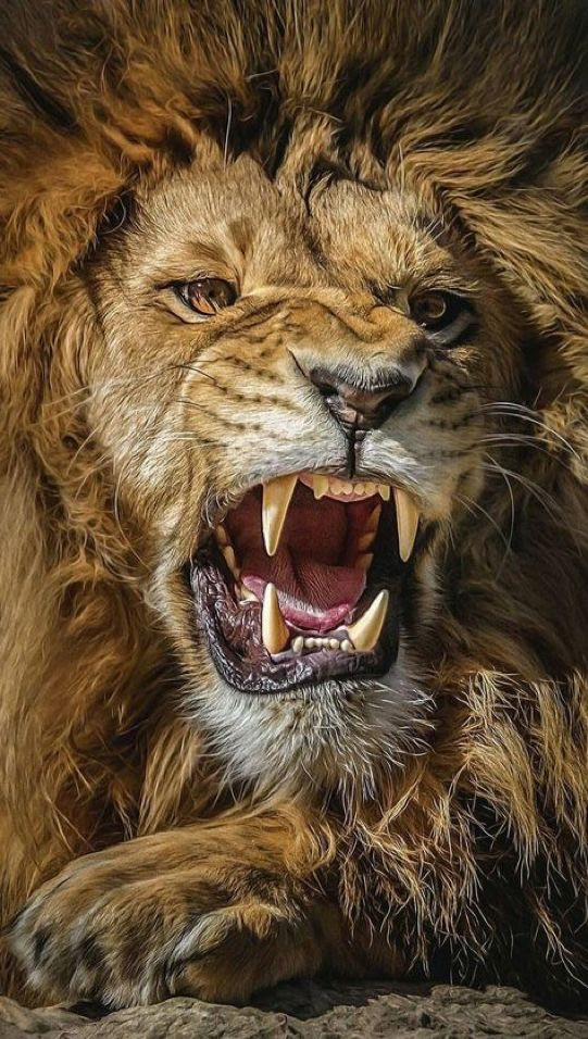 The Lion S Roar Fully Speaking Our Truth