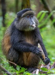 Rwanda Wildlife Seraya