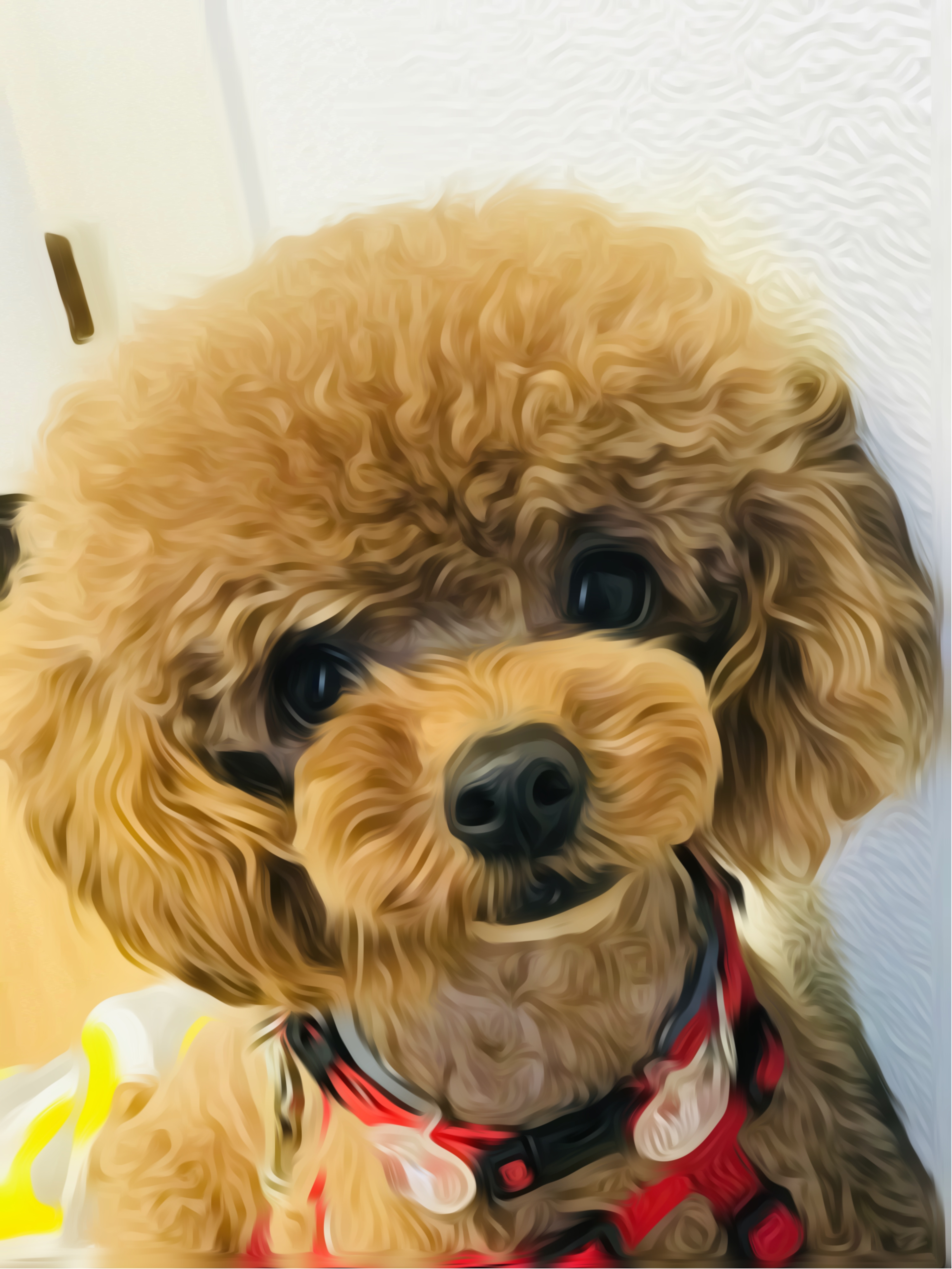 Toy Poodle Puppies for Sale in Michigan - DogsNow