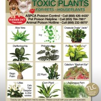 Toxic Garden Plants For Dogs - Garden Ftempo