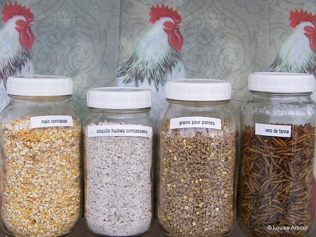 10 pourquoi mes poules ne pondent plus poules en ville. Black Bedroom Furniture Sets. Home Design Ideas