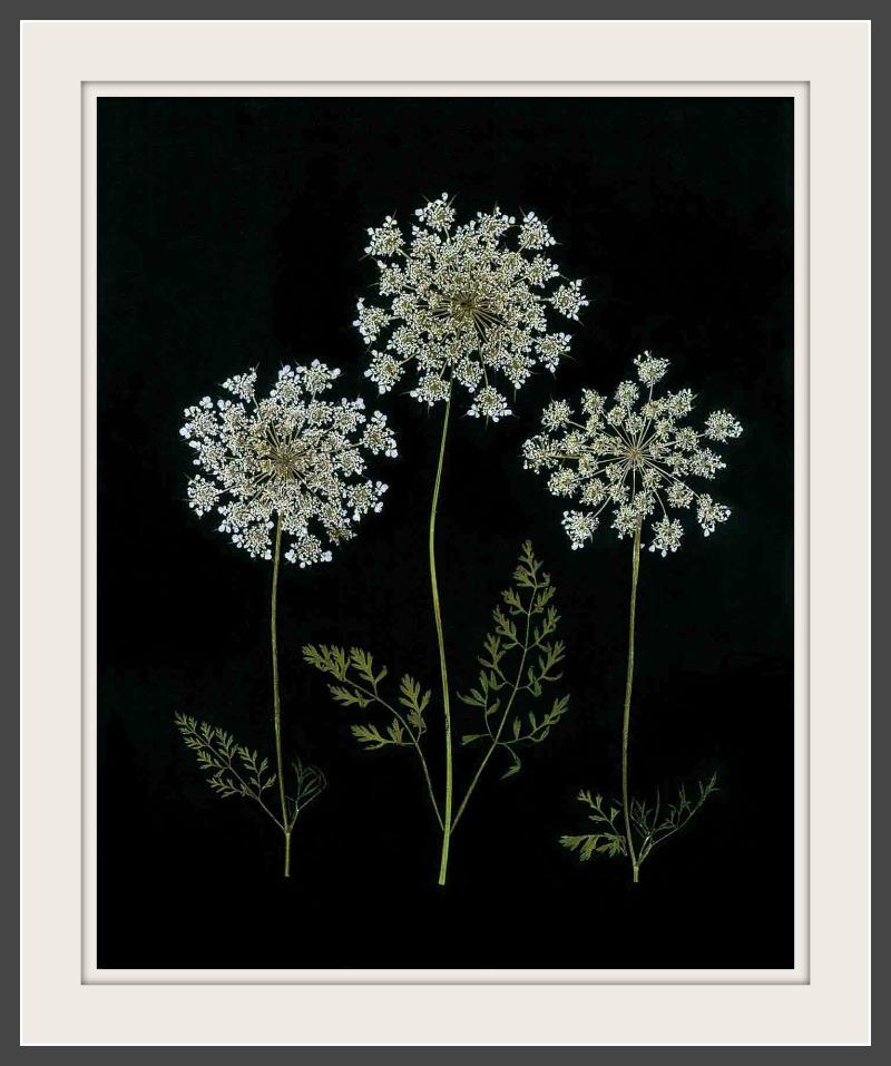 pressed flower art ellie