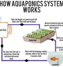 if you wish to know more about the aquaponics system and how to setup one for your own use do contact us for further information  [ 1271 x 1118 Pixel ]