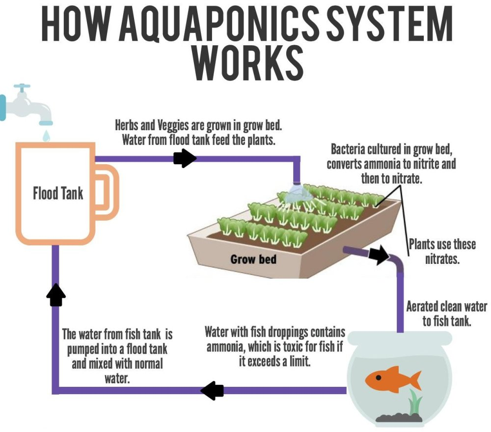 medium resolution of if you wish to know more about the aquaponics system and how to setup one for your own use do contact us for further information