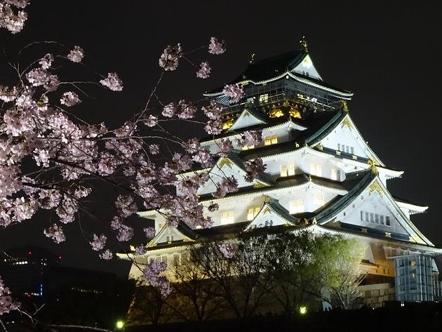 「大阪城公園桜2019ライトアップj時間は?」の画像検索結果