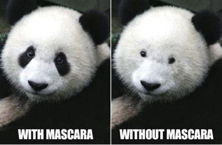 Risultati immagini per no mascara meme
