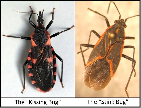 Bite Around Redness Bug