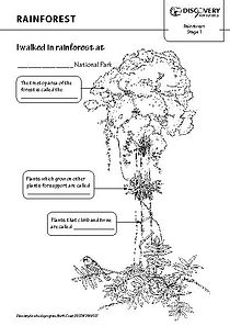 Free rainforest worksheets for teaching and learning about