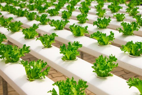 Growing Your Own Food Why It Matters