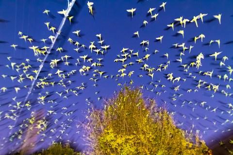 Image result for yoshinori mizutani The birds